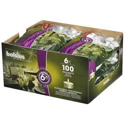 Tea lights Bolsius 6 Hours - Horecavoordeel.com